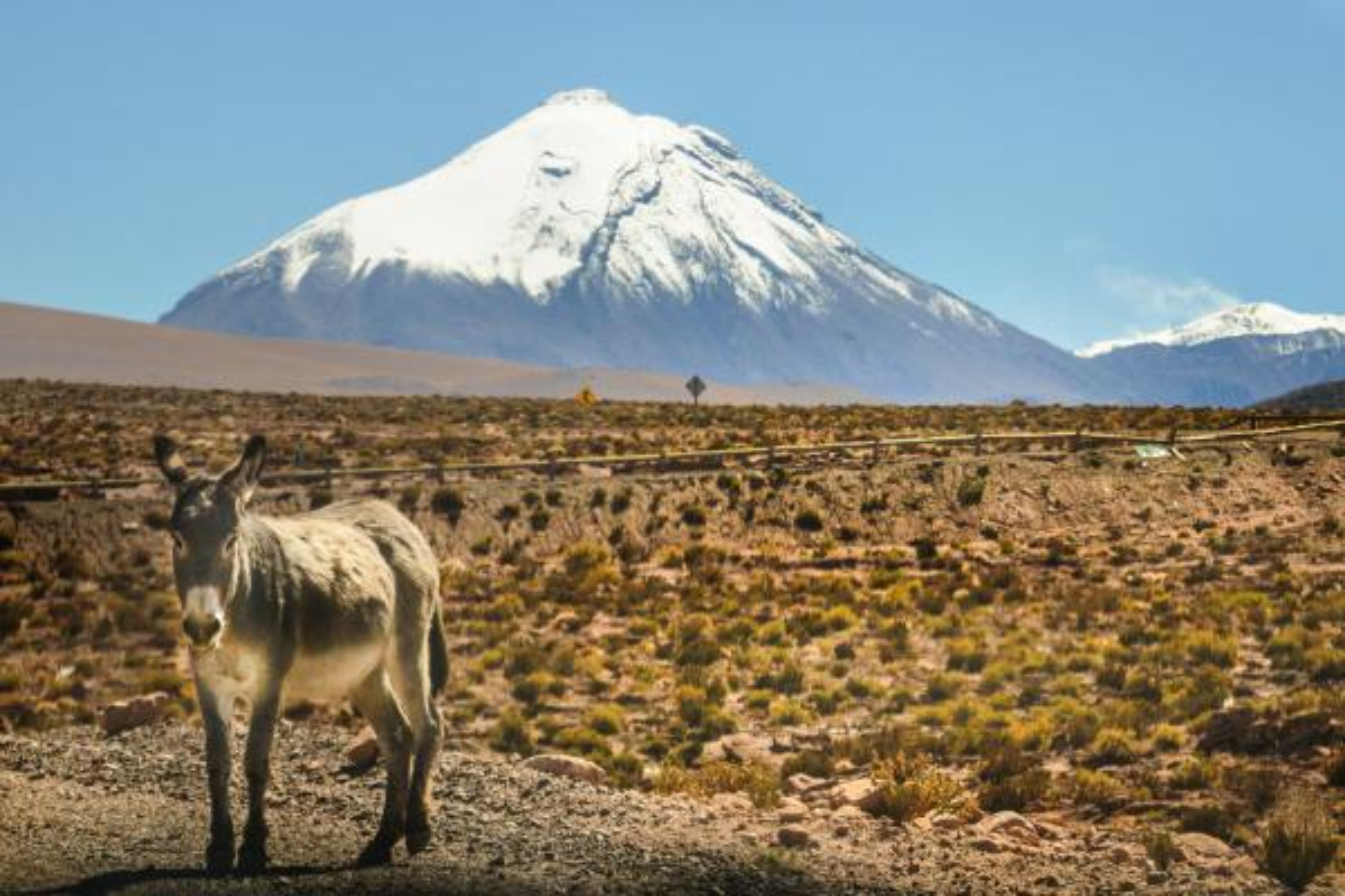 donkey-on-the-road-2